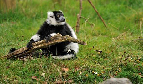 Interesting Facts About Madagascar - The Animal Kingdom of the World